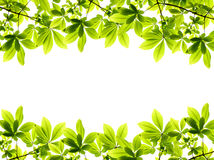 Green fresh leaves frame Royalty Free Stock Photography