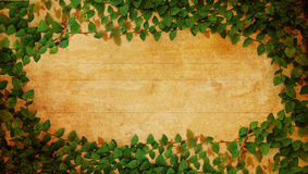 Green Fresh leaves frame. On old paper vintage Royalty Free Stock Image
