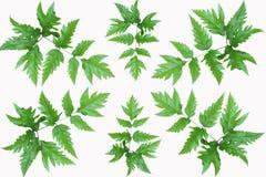 Green fresh leaves frame Stock Image
