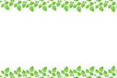 Green fresh leaves frame Royalty Free Stock Images