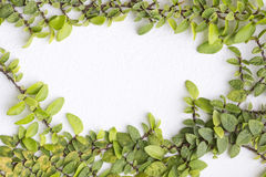 Green fresh. Leaves frame wall Royalty Free Stock Photo