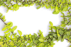 Green fresh. Leaves frame wall Stock Image