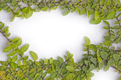 Green fresh leaves frame. Wall Stock Photos