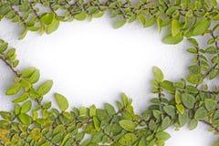 Green fresh leaves frame Stock Photos