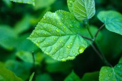 Green fresh leaves with water drops background stock photos