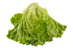 Green fresh lettuce salad closeup isolated on white with clipping path. Green salad isolated on white background as package design element stock photography