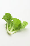 Green fresh lettuce vegetable. Isolated on white background Stock Image