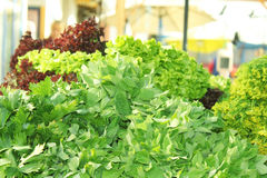 Green fresh lettuce vegetables. At a market stall Stock Photography