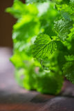 Green fresh melissa. Leaves close up royalty free stock photography