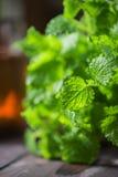 Green fresh melissa. Leaves close up stock image