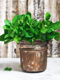 Green fresh mint  in a copper pot Royalty Free Stock Images