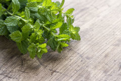 Green fresh mint herbs Royalty Free Stock Photography