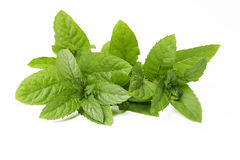 Green fresh mint leaves on white Royalty Free Stock Photo