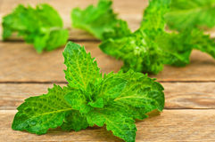 Green and fresh mint Stock Photos