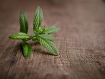 Green fresh mint on the wooden table, selective focus.  Stock Image