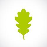 Green fresh oak leaf icon. Vector illustration Stock Photos