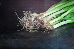 A green fresh onion on a dark antique background. Close-up, Conc Royalty Free Stock Images