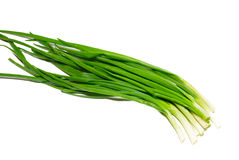 Green fresh onions Stock Photography