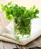 Green fresh oregano Royalty Free Stock Image