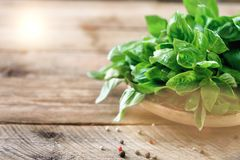 Green fresh organic basil on wooden background with copyspace. Herbs and spices for cooking.  Royalty Free Stock Photo