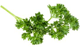 green fresh parsley leaves isolated on white background. top view. flat lay