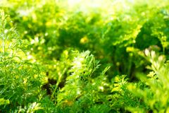 Green fresh plant in morning sun Stock Photos