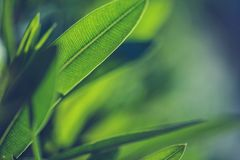 Green fresh plants Royalty Free Stock Image