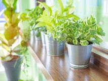 Green fresh plants simple decoration in cafe royalty free stock photography