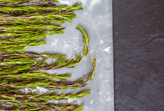 Green fresh rosemary on a gray concrete background. Space for text Stock Photos
