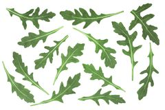 Green fresh rucola or arugula leaf isolated on white background. Top view. Flat lay pattern Stock Image