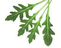 Green fresh rucola or arugula leaf isolated on white background. Top view Stock Photos