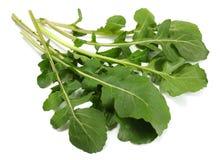 green fresh rucola leaves isolated on white background. Rocket salad or arugula. Stock Image