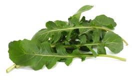 green fresh rucola leaves  on white background. Rocket salad or arugula. Royalty Free Stock Photo