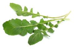 green fresh rucola leaves  on white background. Rocket salad or arugula. Royalty Free Stock Image