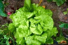 Green fresh salad. Close up from a green fresh salad vector illustration