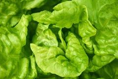 Green fresh salad. Close up from a green fresh salad royalty free illustration