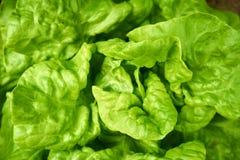 Green fresh salad. Close up from a green fresh salad stock illustration