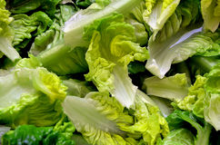 Green fresh salad leaves. Detail Stock Images