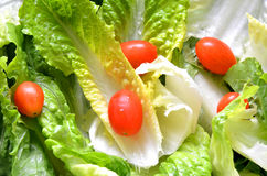 Green fresh salad leaves with tomato. Detail Royalty Free Stock Photo