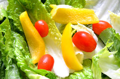 Green fresh salad leaves, tomato and paprika. Detail Royalty Free Stock Image