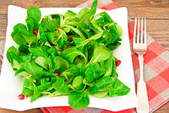 Green Fresh Salad Royalty Free Stock Photo