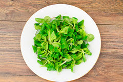 Green Fresh Salad Stock Photography