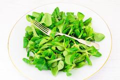 Green Fresh Salad Royalty Free Stock Images
