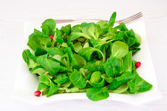 Green Fresh Salad Royalty Free Stock Image