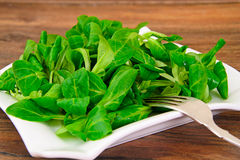 Green Fresh Salad Stock Photos