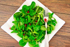 Green Fresh Salad Stock Images