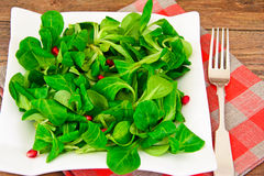 Green Fresh Salad Stock Image