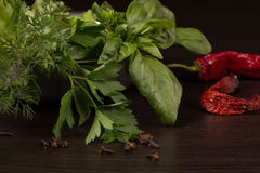 Green fresh spices Royalty Free Stock Image