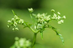 Green fresh spring plant Stock Images