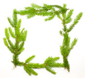 Green fresh spruce frame Royalty Free Stock Images